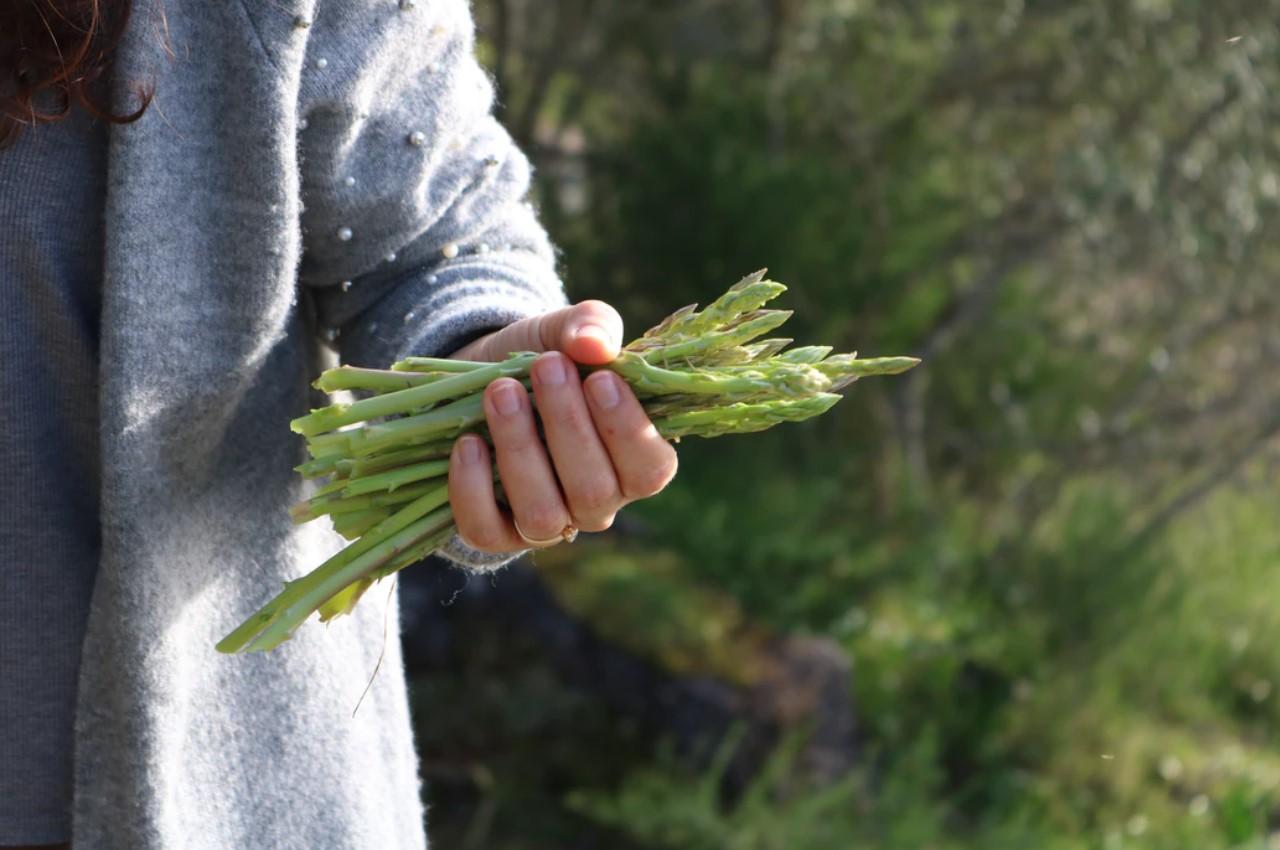 Спаржа-сбор урожая