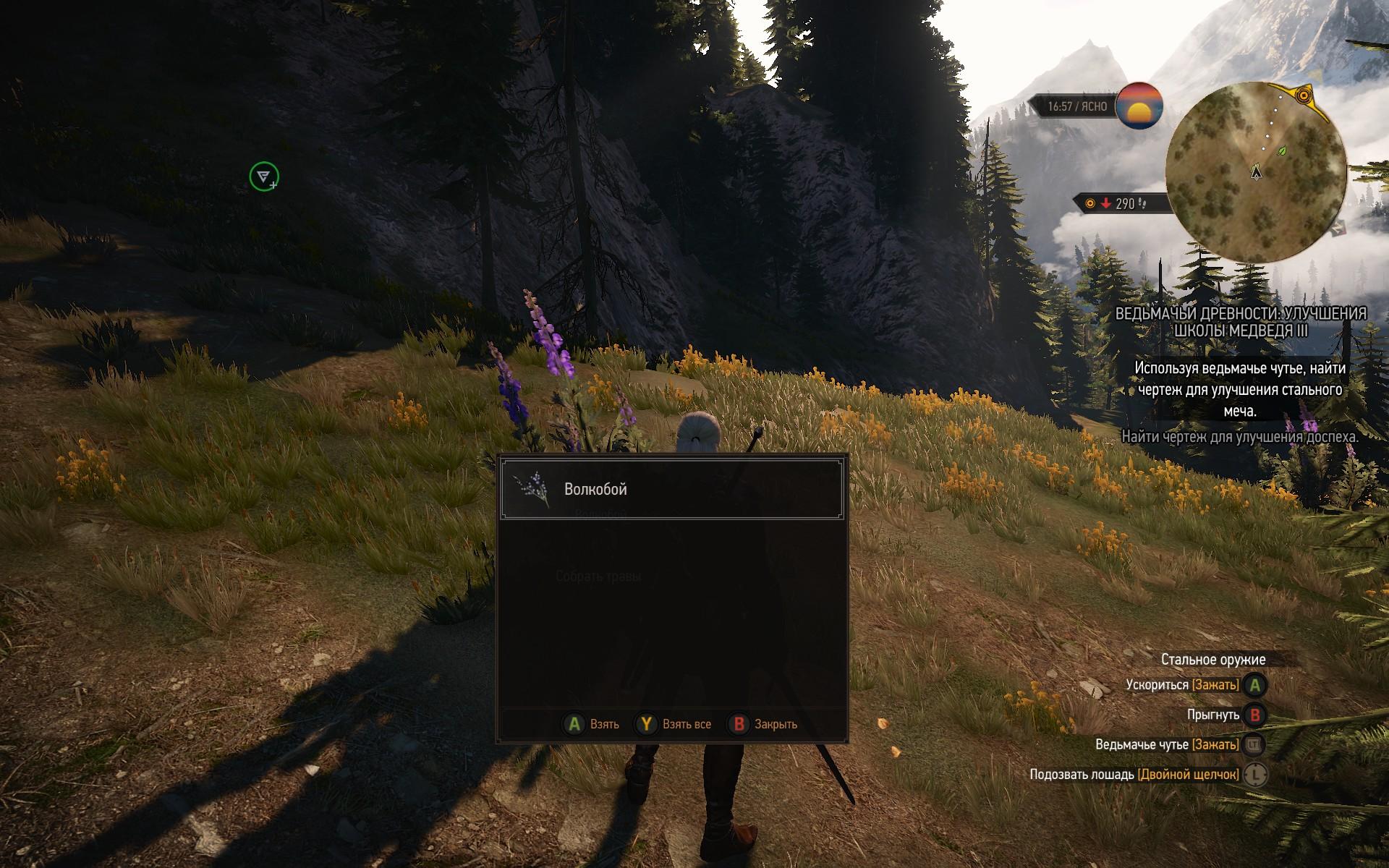 У волкобоя яркие фиолетовые цветы