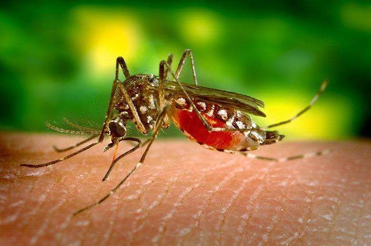 Комар кусає