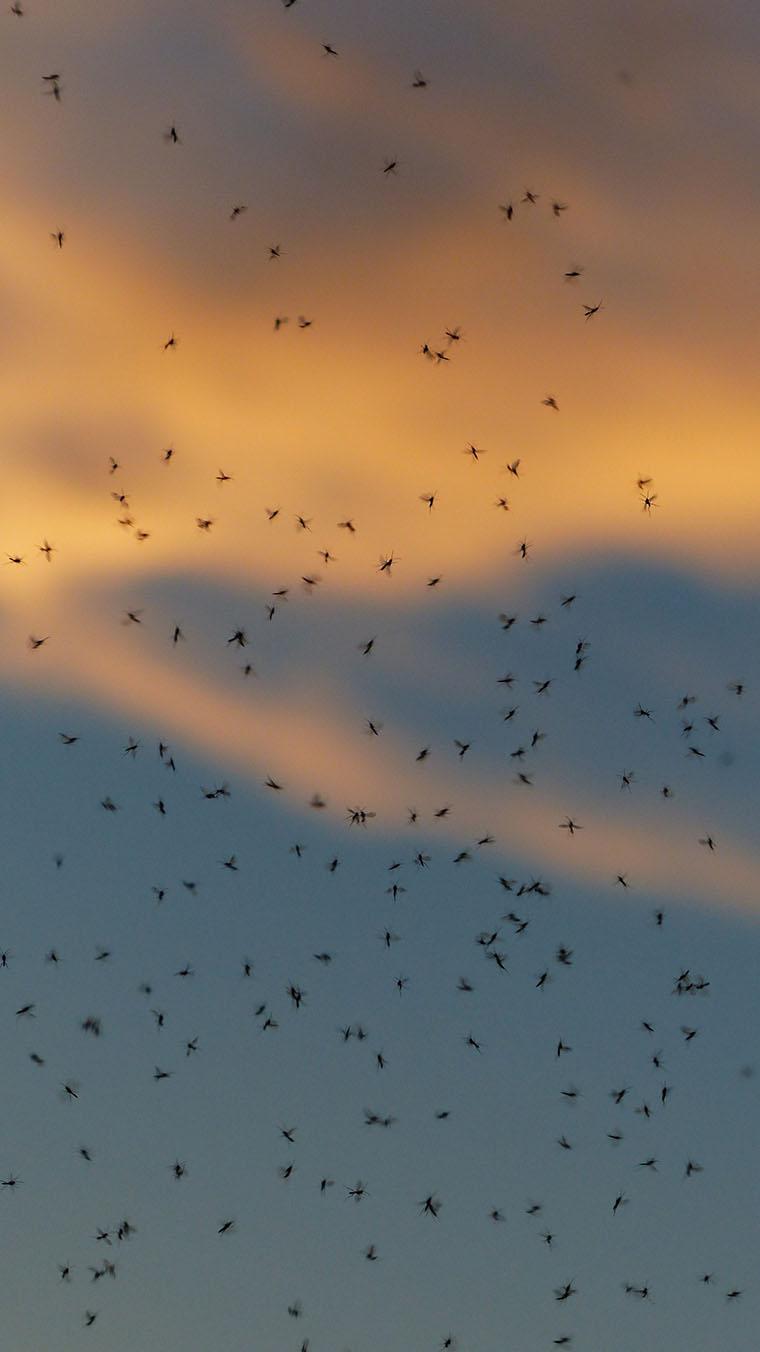 Много комаров