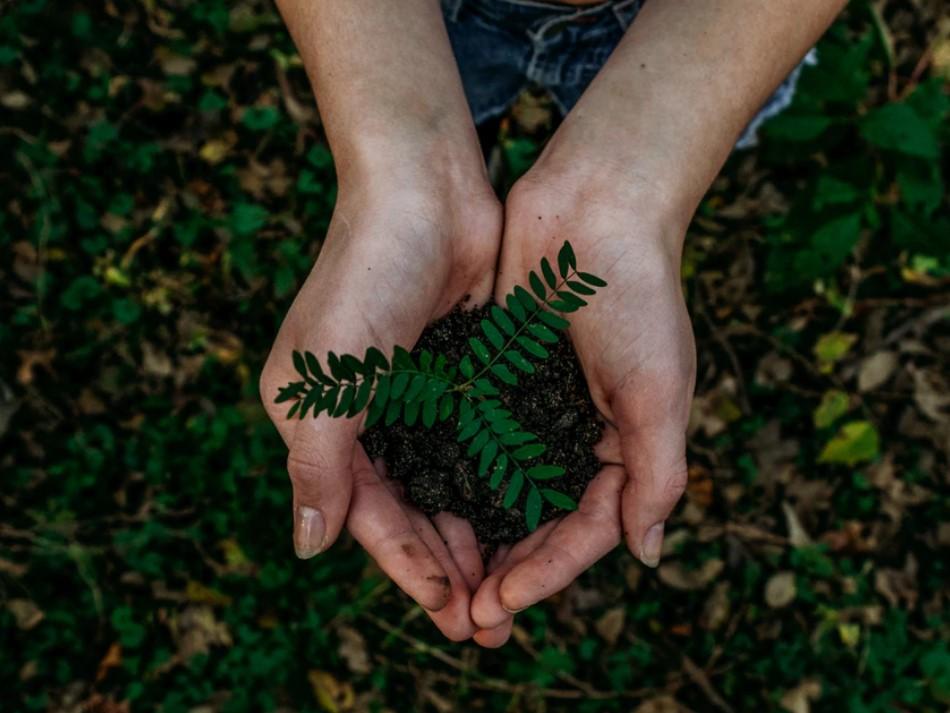 Экологическая осознанность-как развить