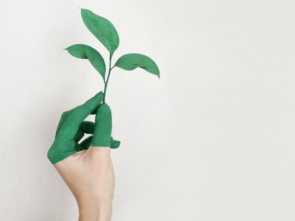 Как стать экологичным-простые шаги